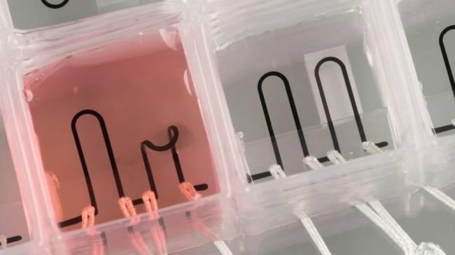 3D yazıcıyla çipli kalp üretildi