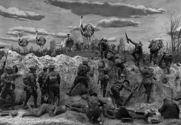 Deve kuşları Avustralya ordusunu yendi: Emu Savaşı #3