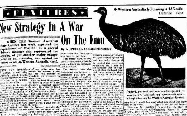Deve kuşları Avustralya ordusunu yendi: Emu Savaşı #5