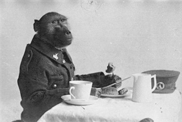 I. Dünya Savaşı hendeklerinde savaşan maymun #1