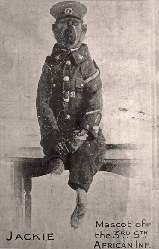 I. Dünya Savaşı hendeklerinde savaşan maymun #3