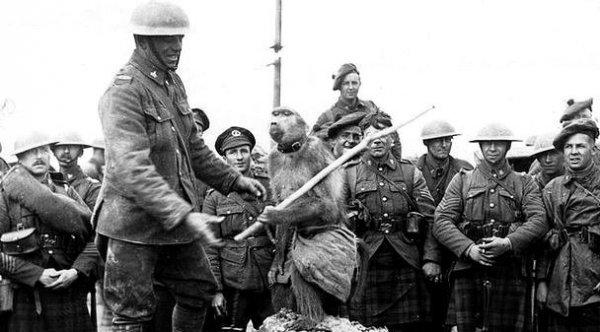 I. Dünya Savaşı hendeklerinde savaşan maymun #6